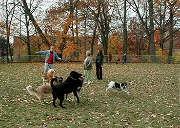 Playing With Dogs at Dog Park